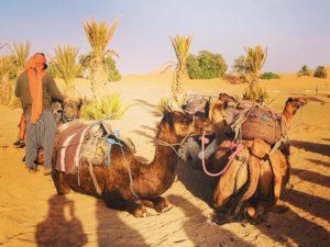 サハラ砂漠 ラクダライド